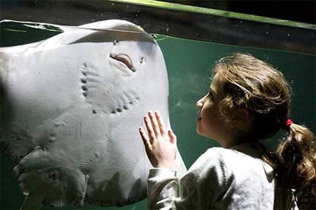 Bristol Aquarium Review 5th October 2016