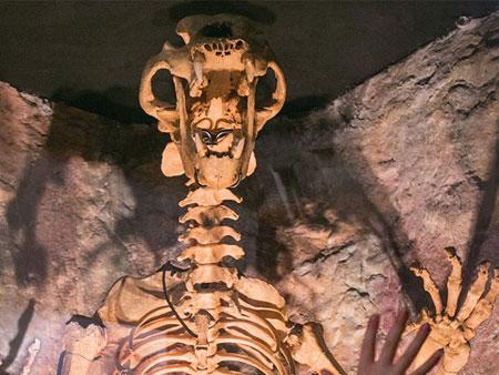 Museum of Prehistory