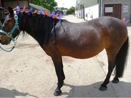 Horseworld
