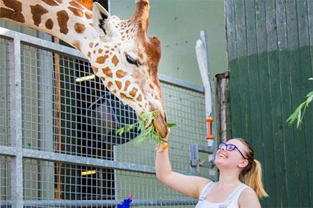 Noahs Ark Farm Zoo