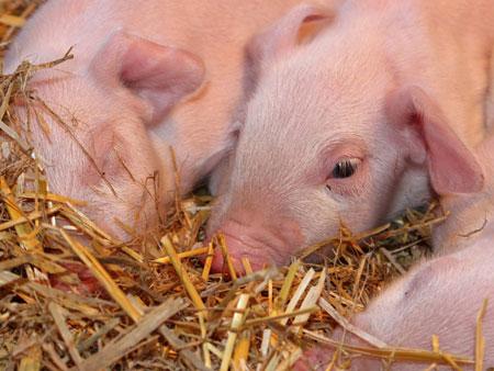 Animals at Windmill Hill City Farm