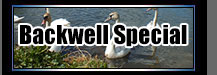Backwell Special