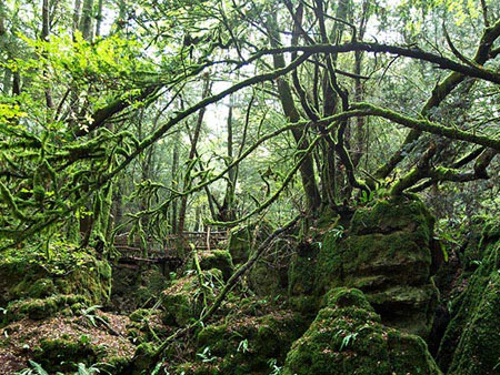 Whats On Bristol Puzzlewood In The Forest Of Dean
